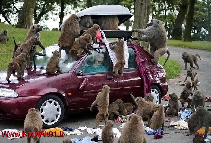 عکس های جالب از حیوانات